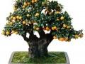 果树老桩盆景的发芽制作及养护管理