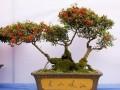 办公室花卉盆景怎么科学养护的3个方法