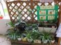 很多幼儿园只有几盆观赏性植物 更像是一个小型的盆景园