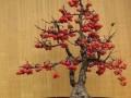 果树盆景怎么发芽管理的9个步骤