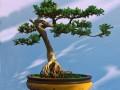 果树盆景怎么盆土上盆与肥水管理的方法