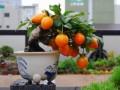制作果蔬盆景的2个注意事项