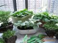 怎么摆放果蔬盆景的2种方式