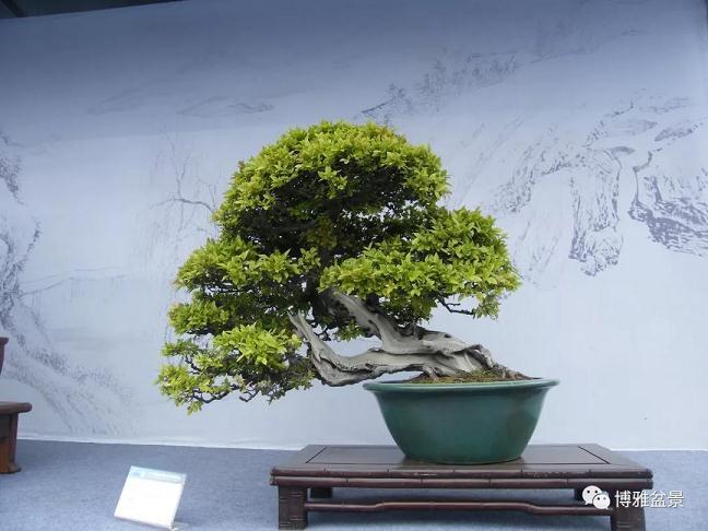 再谈《2013国际盆景大会》(扬州)观感