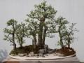 浅述扬派盆景在古典园林中的运用