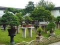 桂林盆景园的基址选择与空间布局