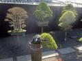 盆景园的竖向规划与植被规划