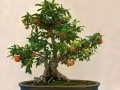 盆栽果树发芽后怎么施肥 图片