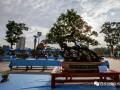 云南昊龙杯盆景奇石根艺精品邀请展将在鲁甸举行