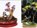 悬崖式菊花盆景的造型技巧