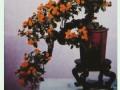 悬崖式菊花盆景的施肥技巧