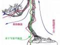图解 文人树盆景怎么制作的过程