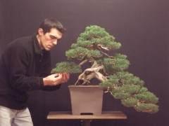 外国盆友制作柏树盆景的过程[图片]