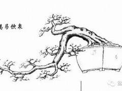 岭南盆景造型百态图 4