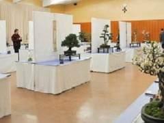 湾区盆景协会在加州奥克兰举行第27届年度展