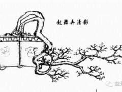图解 岭南盆景的提根临水型与双杆大树型