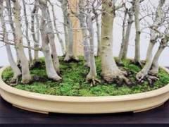 图解 丛林盆景怎么制作的技巧