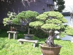 上海植物盆景园将会为市民打造美观的游园环境