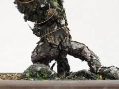 盆景树干最大的障碍是在树干底部