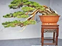 2013年扬州国际盆景大会回看