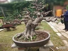 2018年5月 河南省盆景创作研讨会在确山县召开