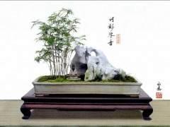 制作竹子盆景 事先要储备素材 可选用小型品种