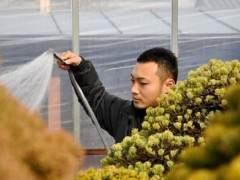 看我如何养护美丽的盆景花园?