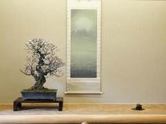 访问日本盆友铃木信二的盆景园
