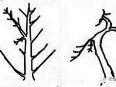 图解 适用盆景造型的几种形式
