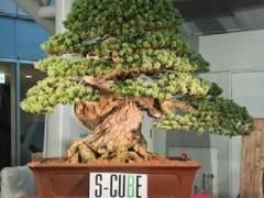 第十一届亚太盆景和苏塞基会议展