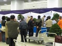 2011年的Grandview盆景展在日本京都举行