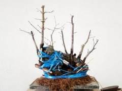 如何修剪岩石枫树盆景的根部