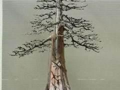 如何制作直杆盆景盆景?