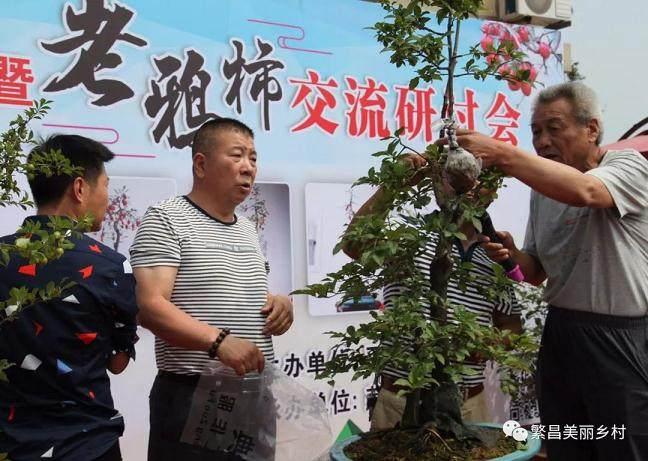 平铺镇首届盆景节暨老鸦柿交流研讨会