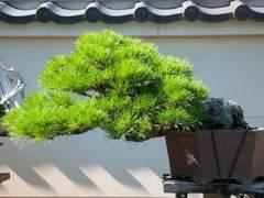 新福寺盆景博物馆