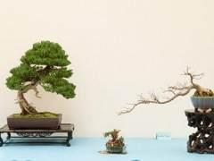 湾岛盆景第十四届年度展览中展出小品盆景