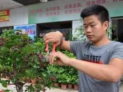 农村小伙靠盆景手艺 去年总收入6多万元