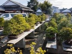 访问九州南部的盆景爱好者福永先生
