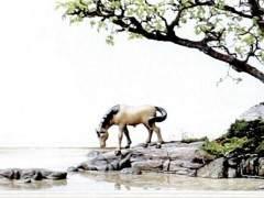 制作树石盆景的用材有哪些?
