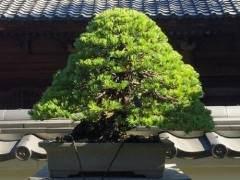 日本新福寺盆景博物馆