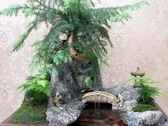 种植澳洲杉盆景的5个注意事项