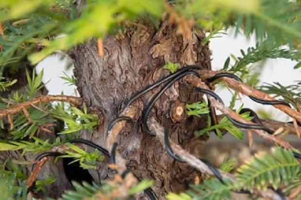 树干上出现新芽