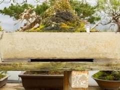 铃木信二盆景园里的盆子