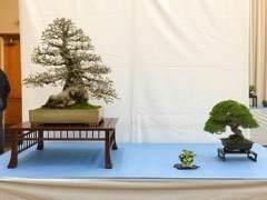湾区盆景协会第35届年度展览