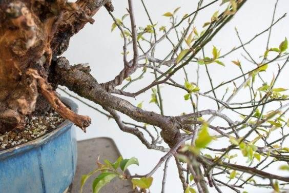 盆景直枝 - 不适合树的设计