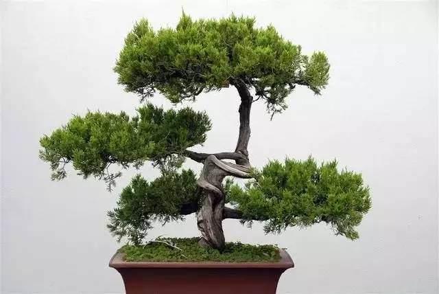树木盆景新制作,我们该选取什么材料?