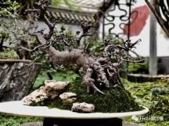 韩国都江堰市盆景艺术协会签署合作协议