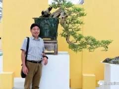 雀舌罗汉松盆景的修剪 施肥和治虫