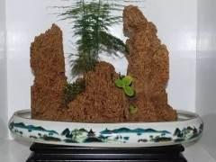 6个步骤 教你制作上水石盆景