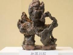 在世界盆景大会上选出日本100强的雅石